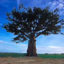 美化树烟囱
